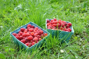 raspberry baskets